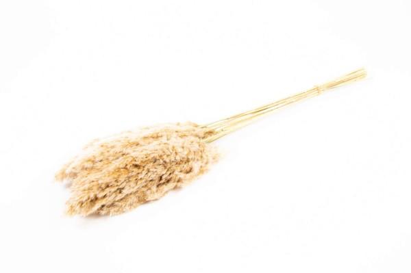 Wild reed plume S/10 L75cm